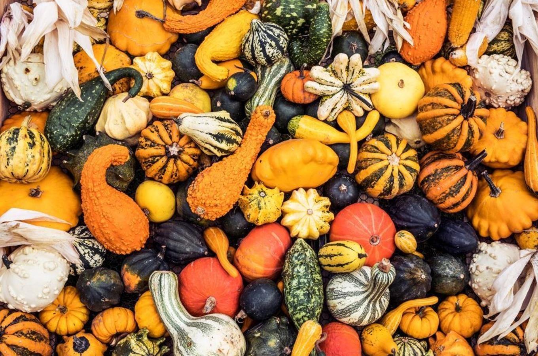 Dýňový podzim v trojské botanické zahradě
