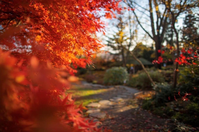 Podzim ve venkovních expozicích trojské botanické...