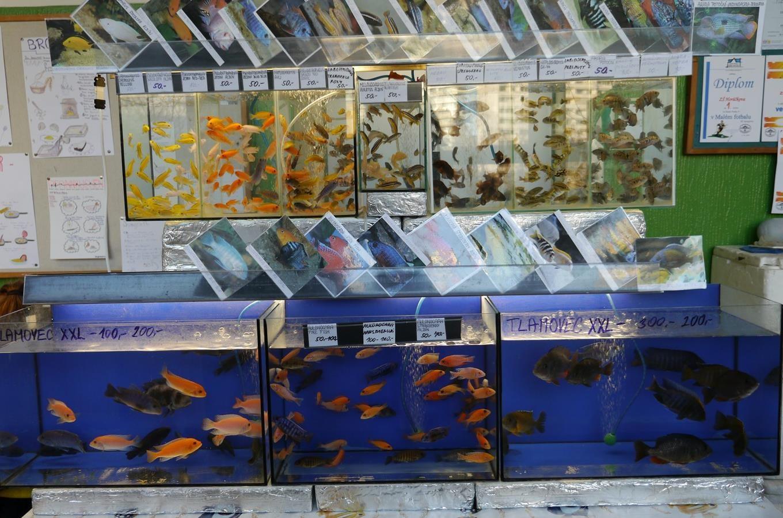 Ryby a rybičkynejvětší výstavní a prodejní...